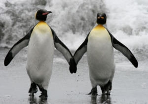 penguin-couple